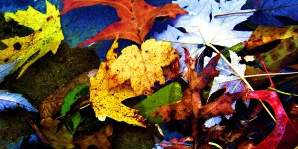 leavesandwater